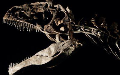 Dinosaur skeleton auction