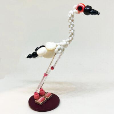 Flora the Lesser Flamingo