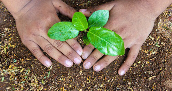 World Environment Day: How companies across AM International are fostering a sustainable future