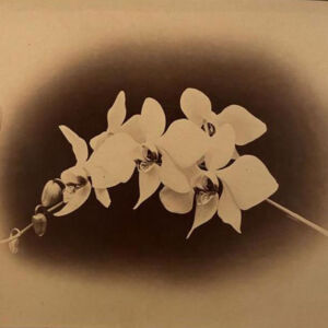 The Wick - Unearthed: Photography's Roots