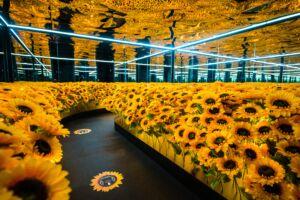 The Wick - Van Gogh Alive, Kensington Gardens, Images: rb create