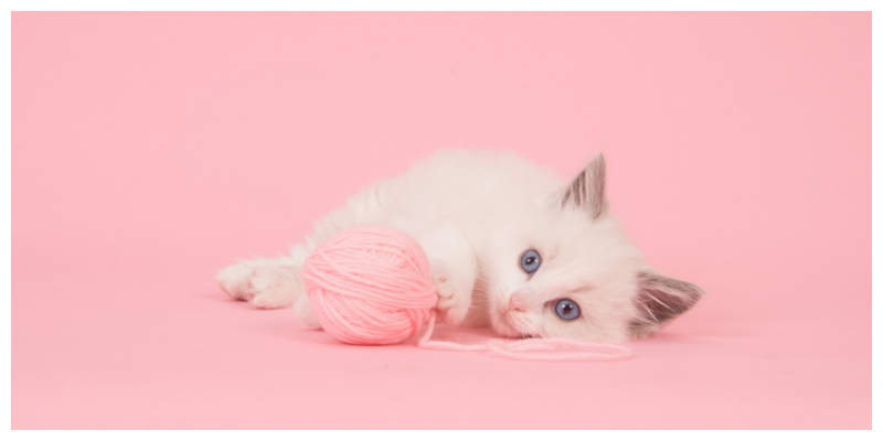 kitten pink background with ball of pink wool