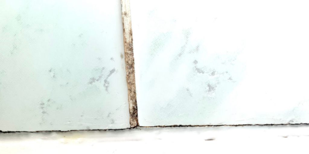 mold in grout