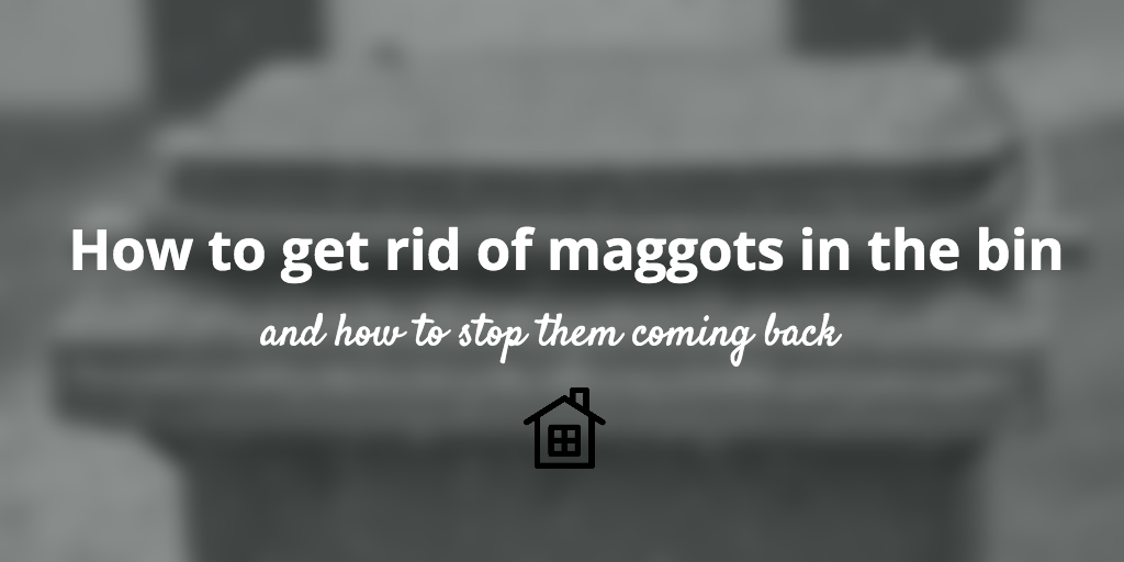 how to get rid of maggots in the bin