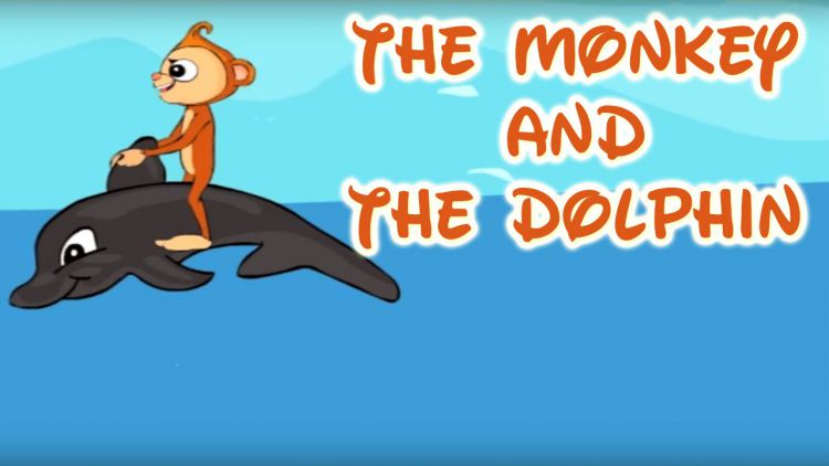 monkey and the dolphin story