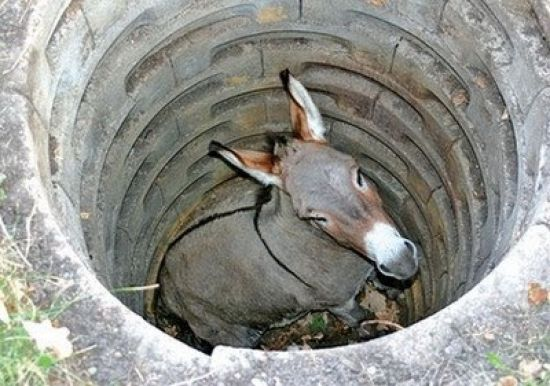 donkey in the well