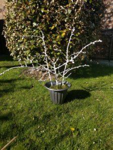 How to make a wedding tree