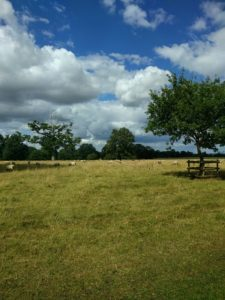 A Lovely Day at Ickworth