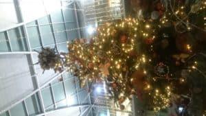 Norwich Forum Christmas Tree