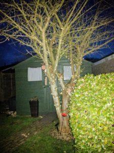 My tree at night