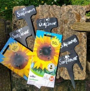 GBC Group Sunflower Growng
