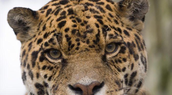 Amazona Zoo Celebrates Ten Years with Teddy Bears Picnic