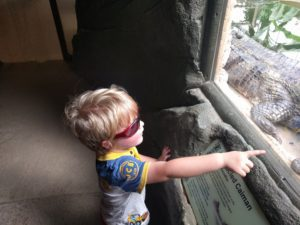 Boy in sunglasses pointing at a Caiman