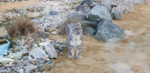 Snow Leopard at Banham Zoo