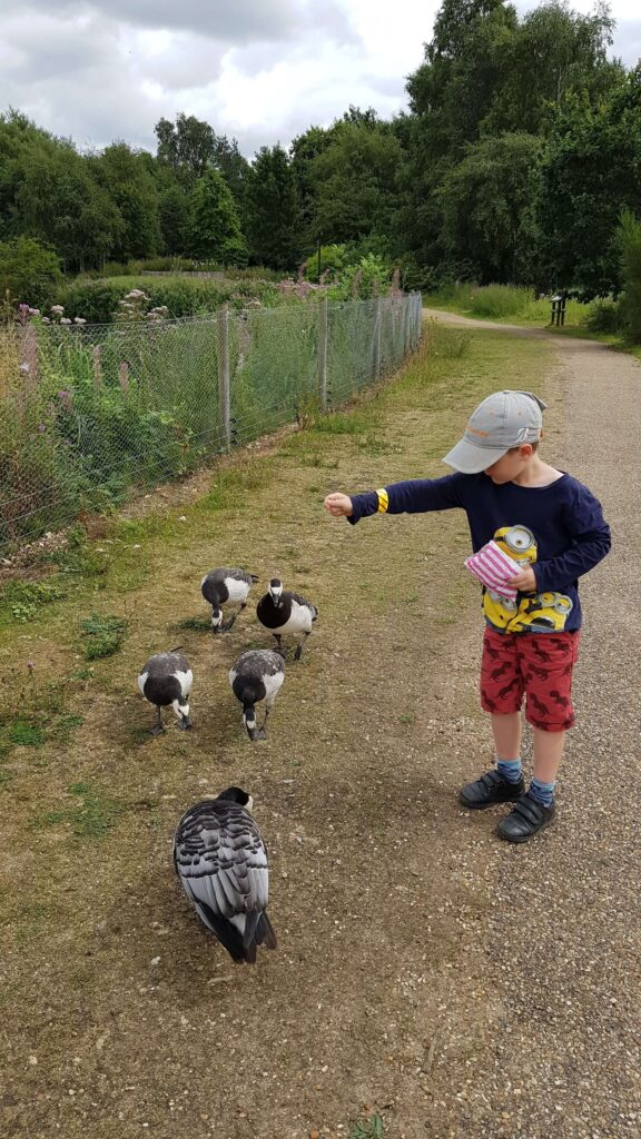 Feeding the birds at Pensthorpe