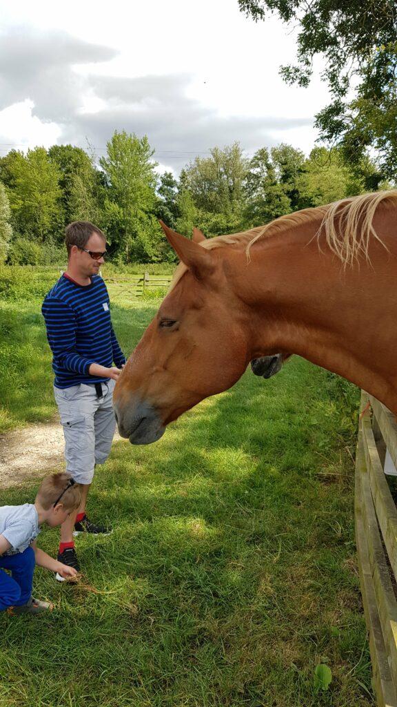 Horses gressenhall