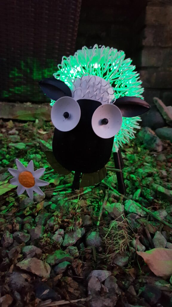 Dolly the sheep from Red Candy