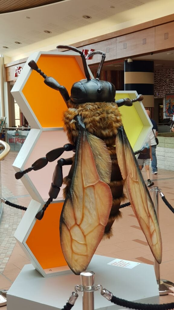 intu Chapelfield big bugs