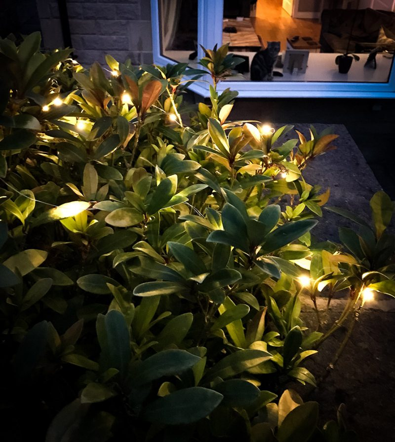 Outdoor wire lights