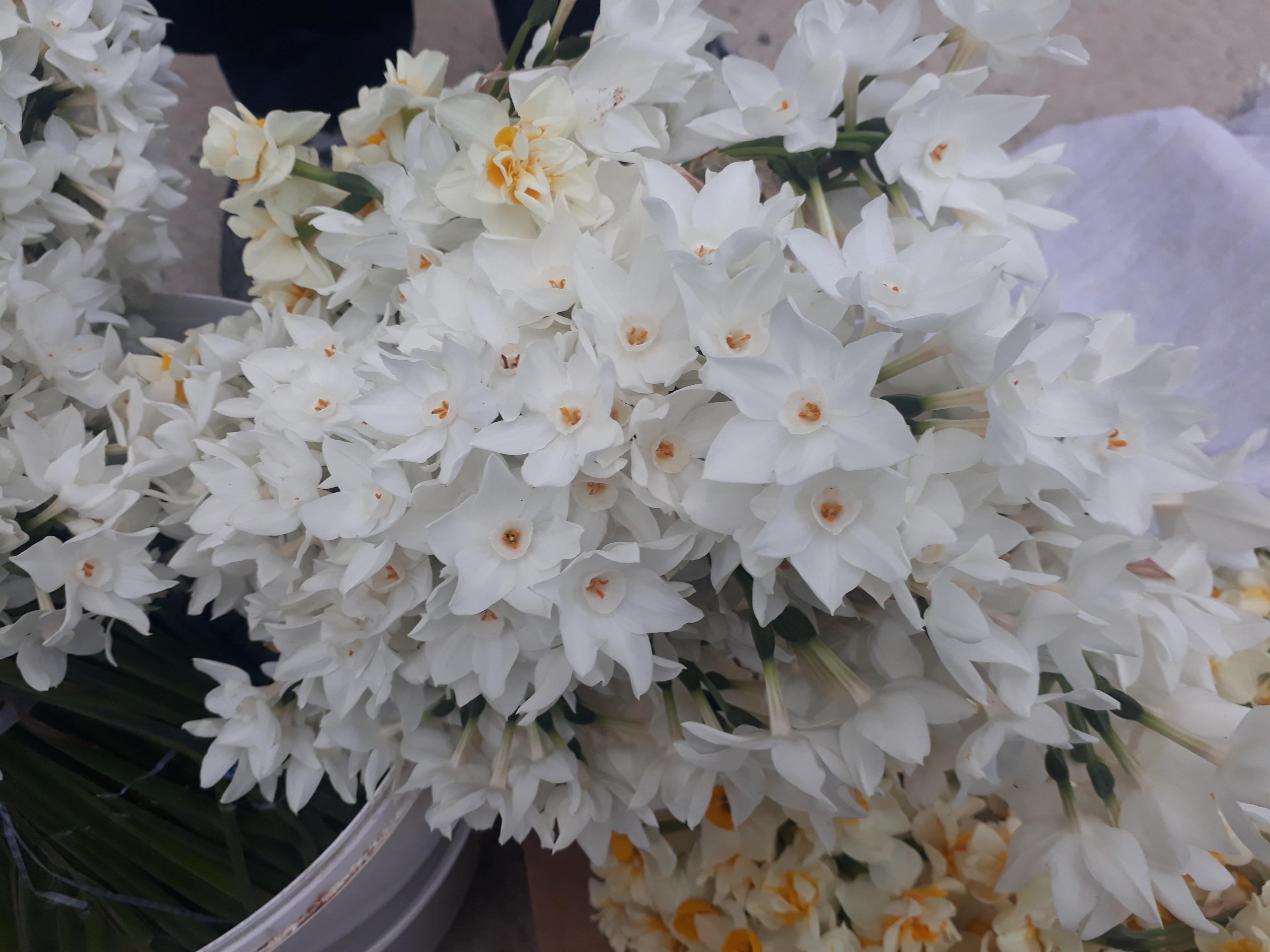 Bir Çiçeğin Hikayesi (Nergis)