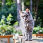 Paula Sparkes Cat 11