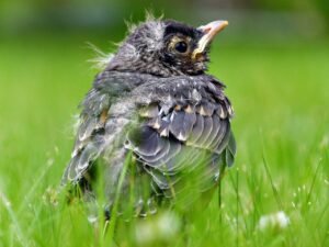 Found a baby bird? PLEASE READ THIS