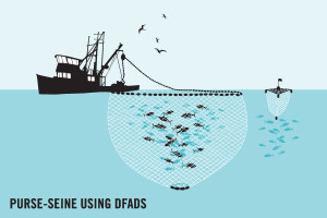 Fishing by purse seine using DFADs graphic