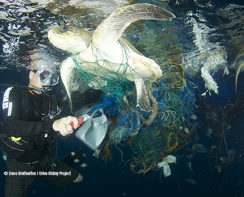 What Are Ghost Nets?