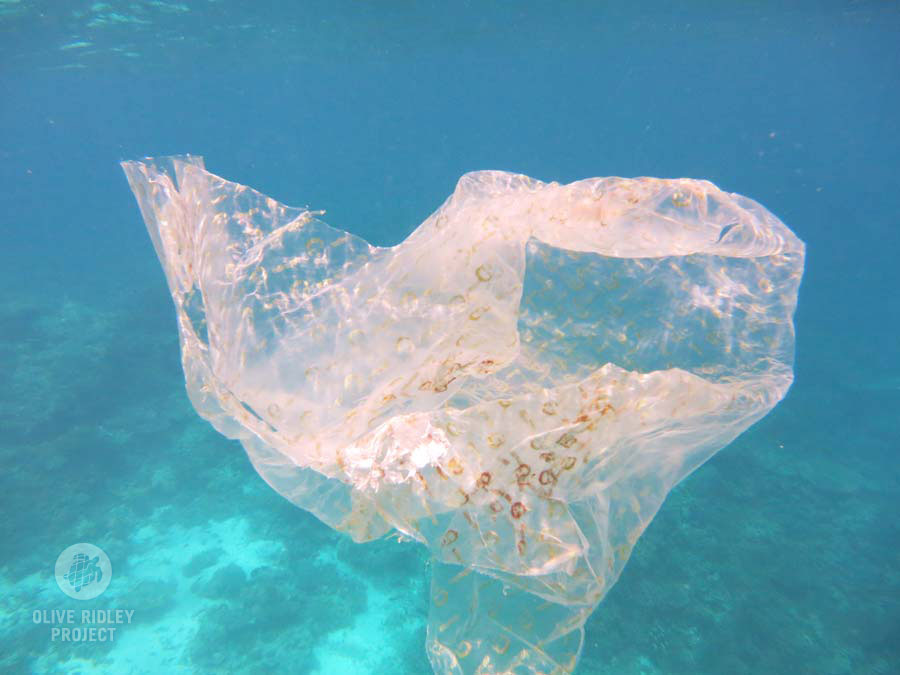plastic floating in the ocean Maldives