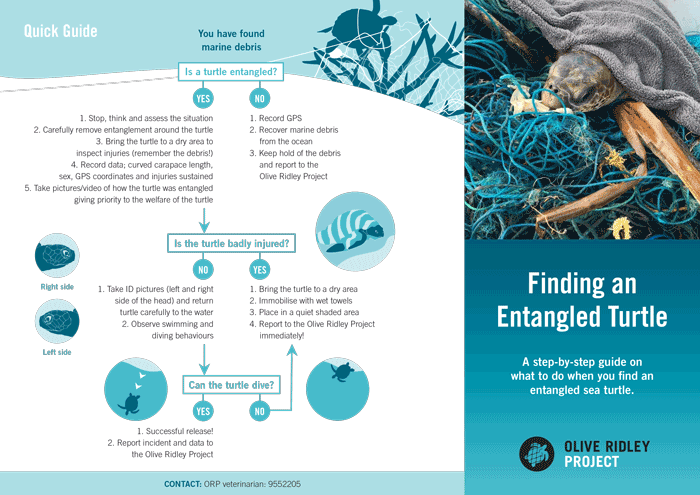 ORP Turtle Entanglment Protocol. Infographic.