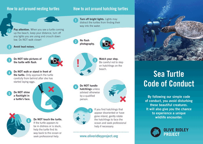 Sea Turtle Code of Conduct. Infographic.