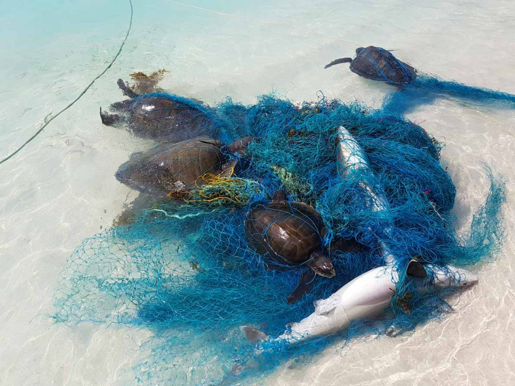 Ghost net removed from Lhaviyani Atoll in Maldives with four Olive ridley turtles and two sharks entangled.