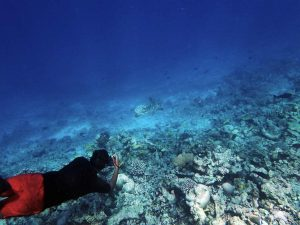 ORP Project coordinator, Shameel, photo-ID'ing a hawksbill turtle