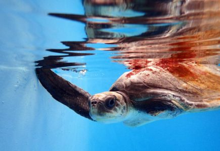 Volunteering With Turtles In Maldives – A Different Holiday Experience
