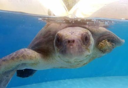 Turtle Patient Update | ORP September 2018