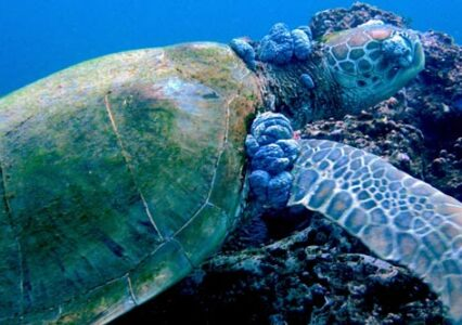 The Impact of Pollution On Sea Turtles