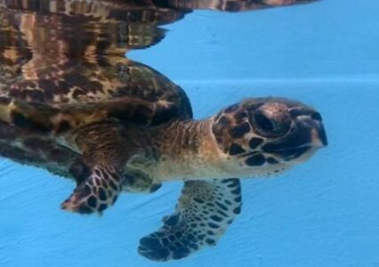 ORP Turtle Patient Update Issue 14|2019