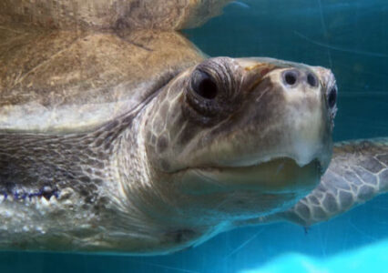 ORP Turtle Patient Update Issue 2|2020