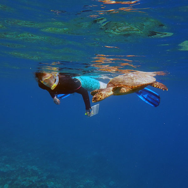 Women in science: Dr. Jillian Hudgins during a turtle research expedition in Maldives, studying a hawksbill turtle.