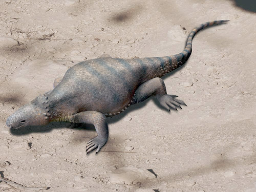 Life reconstruction of Eunotosaurus in a terrestrial habitat. Artistic interpretation. ©Nobu Tamura, image