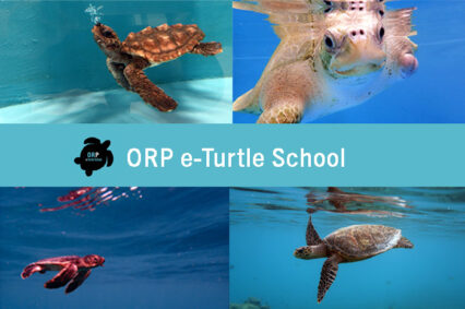 e-Turtle School – All About Sea Turtles