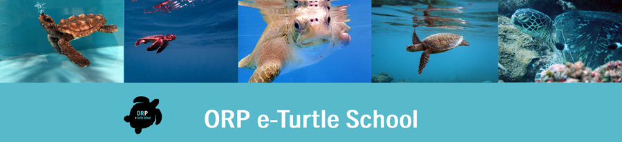 e-Turtle School, a free online course that teaches you everything you ever wanted to know about sea turtles, from biology to conservation.