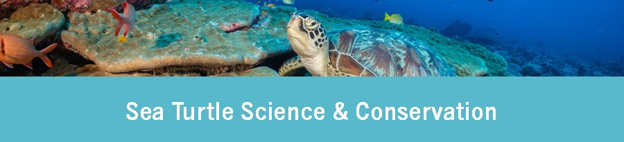 Sea turtle science and conservation. Free course by Olive Ridley Project.