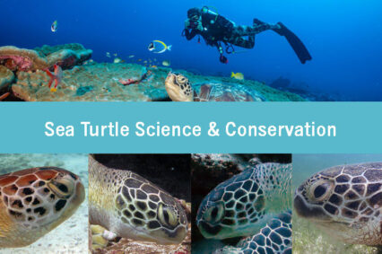 Sea Turtle Science & Conservation