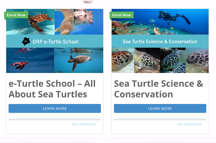 ORP's e-learning platform - free sea turtle courses and resources.