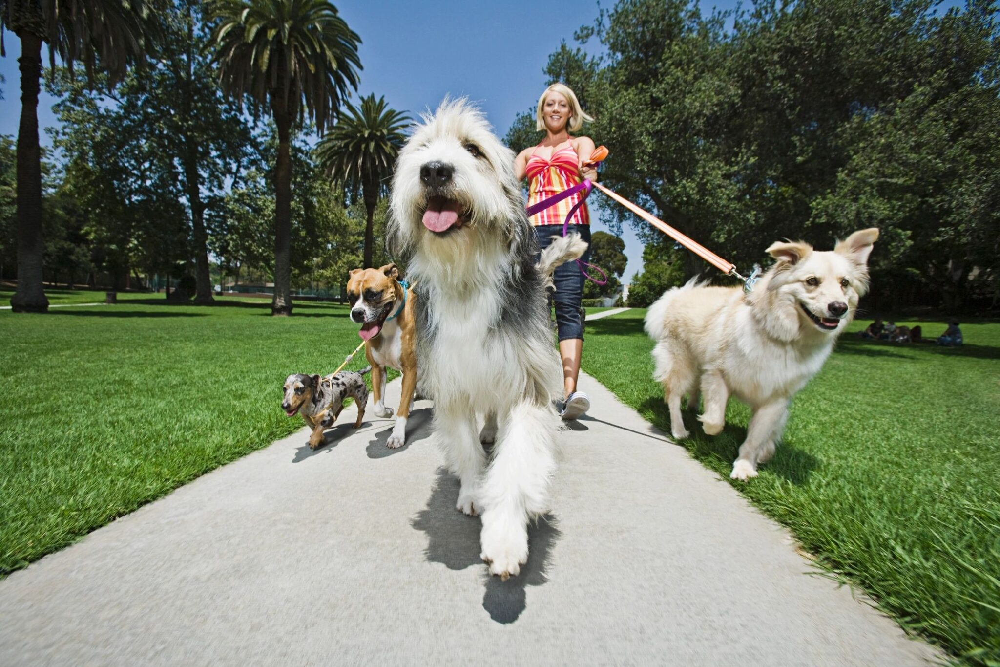 Dog Friendly places near Rome 2