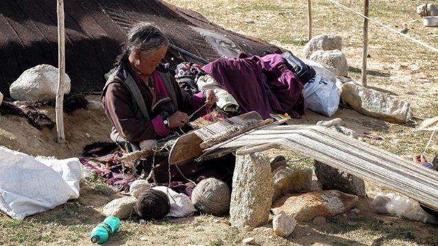 India-China border dispute 'killing thousands of pashmina goats'