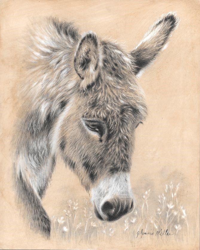 New Project: Alternative Donkey Portrait ColourWheel Art Classes