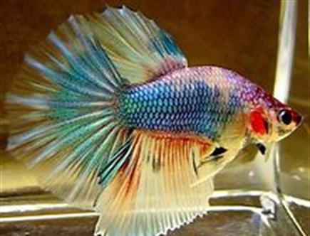 New Project - Soft Pastels - Rainbow Betta Fish ColourWheel Art Classes
