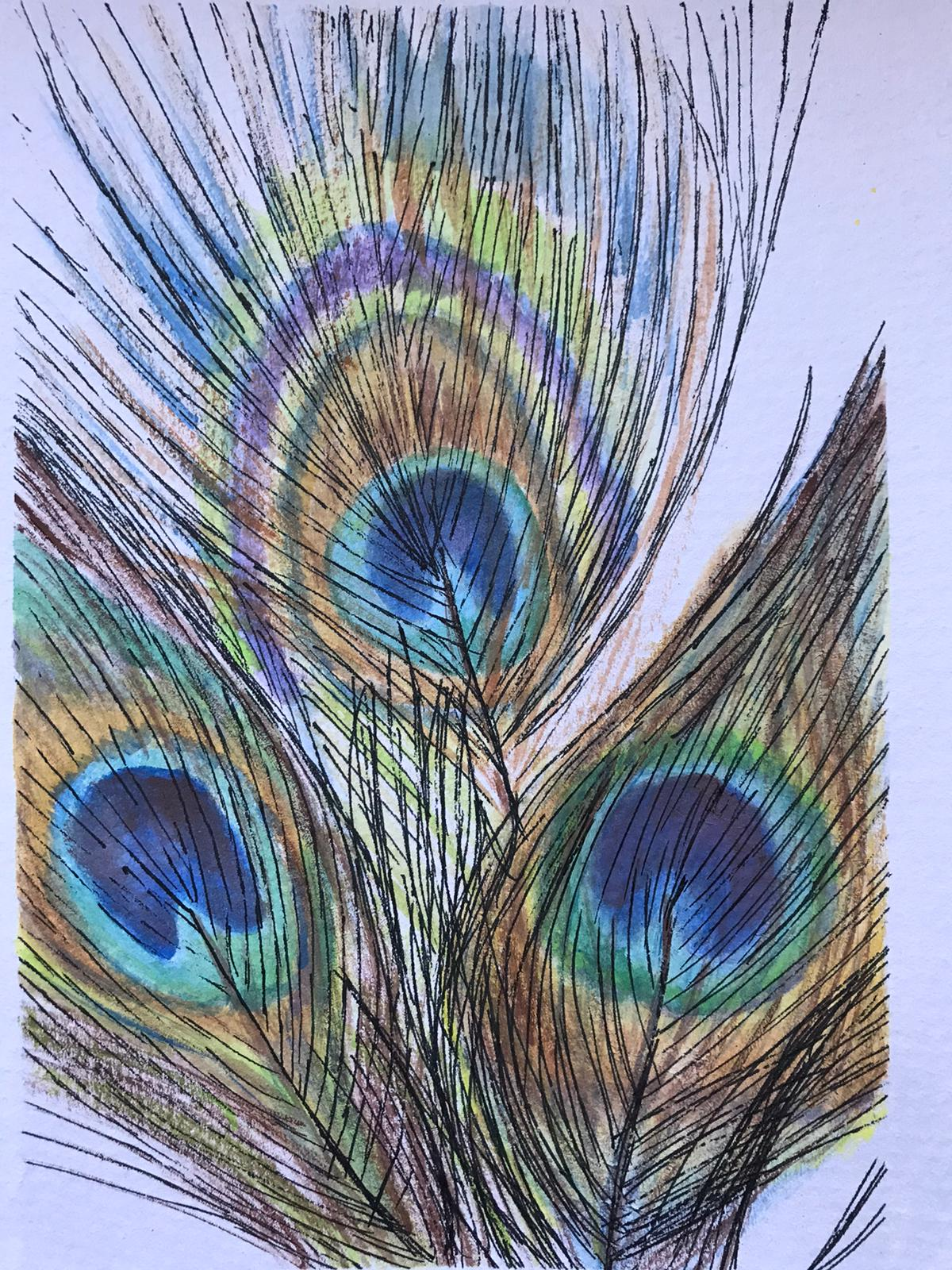 Peacock Feather Competition Results ColourWheel Art Classes